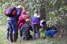 Herfststruintocht door het Wikelslân voor kinderen (6+)