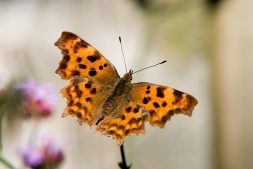 Wandelen langs libelles en vlinders – vlakbij Leeuwarden