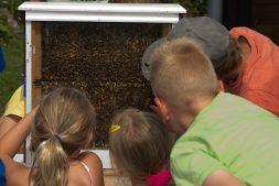 Lezing: De wondere wereld van solitaire bijen en hommels