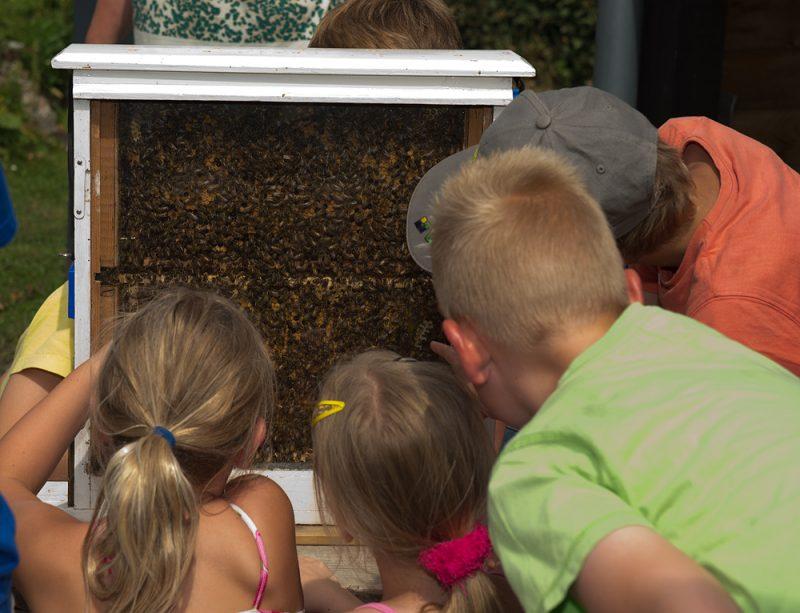 bijen bekijken earnewald