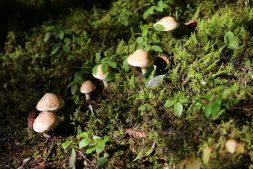 Herfstwandeling door de Jan Durkspolder met speciale aandacht voor paddenstoelen