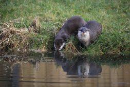 Digitale Otter- en Bever-lezing