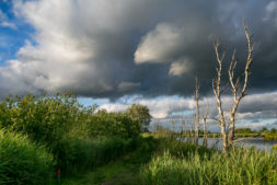 Midwinterwandeling door de natuur vlakbij Earnewâld